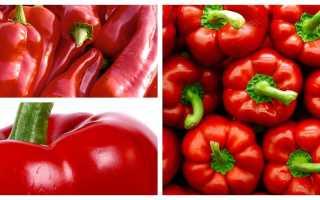 Чем полезен красный перец болгарский