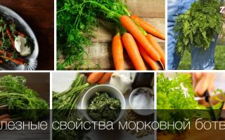 Морковная ботва чем полезна