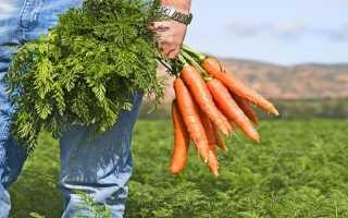 Морковный сок для мужчин чем полезен