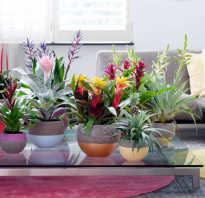 Самые полезные для дома растения