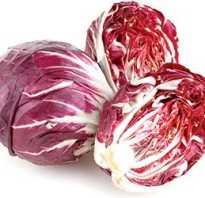 Полезные свойства салат радичио