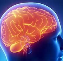 Полезные для мозга продукты