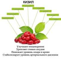 Кизил польза и вред для организма