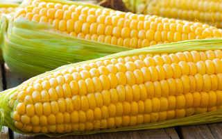 Кукуруза полезные свойства
