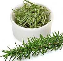 Розмарин чай полезные свойства