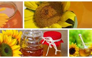Мед подсолнечниковый полезные свойства