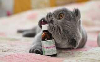 Полезна ли валерьянка для котов