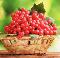 Полезные свойства калины ягоды