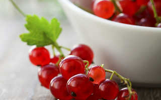 Красная смородина польза и вред для здоровья
