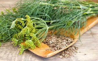 Семена укропа полезные свойства