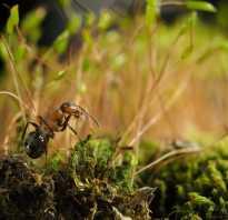 Чем в лесу полезны муравьи