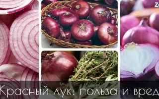 Чем полезен красный лук для организма человека