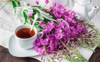 Кипрей иван чай полезные свойства и противопоказания