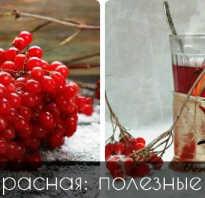 Ягода калина красная полезные свойства и противопоказания