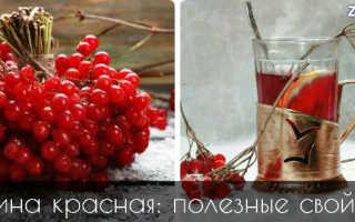 Ягоды калины красной полезные свойства и противопоказания