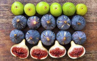 Сушеный инжир полезные свойства