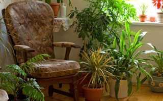 Полезные цветы комнатные для дома