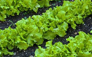 Салат польза и вред