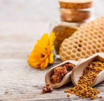 Чем полезна пчелиная перга