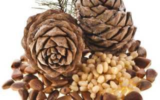 Чем полезен кедровый орех для женщин