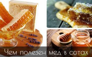 Чем полезны соты пчелиные для организма