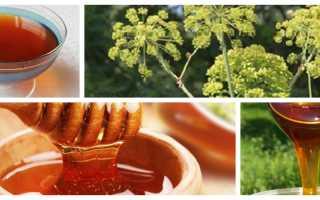 Мед дягилевый полезные свойства