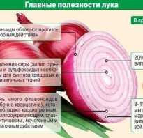 Чем полезен репчатый лук для мужчин