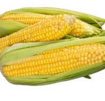 Кукуруза полезные свойства и противопоказания