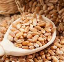 Чем полезны ростки пшеницы