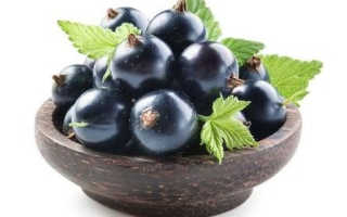 Смородина черная чем полезна для организма