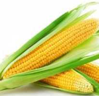 Кукурузная мука полезна ли