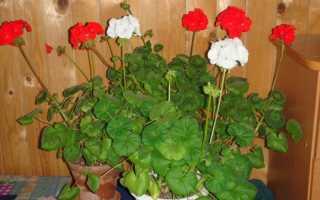 Полезные цветы для дома приносящие здоровье