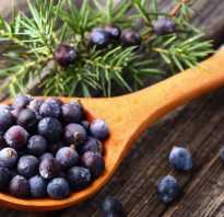 Можжевеловые ягоды полезные свойства и противопоказания