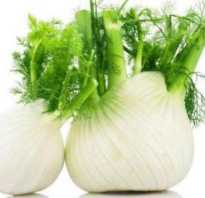 Фенхель полезные свойства семена