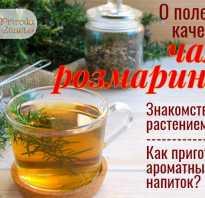 Чай розмарин полезные свойства