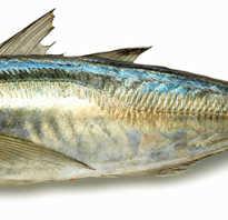 Рыба скумбрия польза и вред