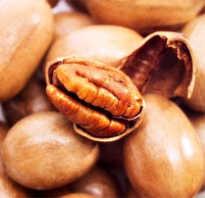 Орех пекан фото полезные свойства