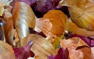 Шелуха лука полезные свойства и противопоказания