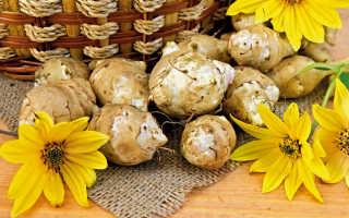 Топинамбур овощ полезные свойства