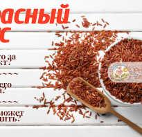 Красный дрожжевой рис польза и вред