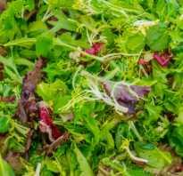 Полезная зелень для салатов