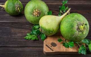 Редька зеленая полезные свойства и противопоказания