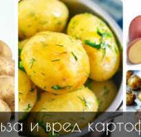 Печеный картофель польза