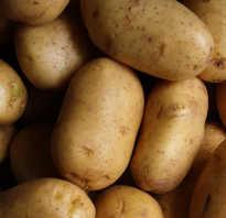 Чем полезна вареная картошка