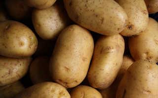 Чем полезна картошка вареная