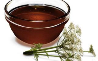 Мед дягиль полезные свойства