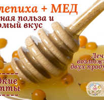 Полезные свойства облепиха с медом