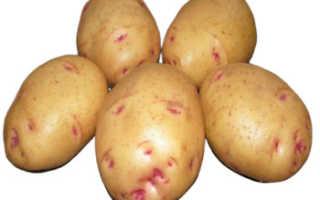 Картошка польза и вред