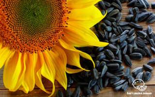 Польза и вред семечек подсолнуха жареных