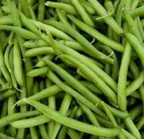 Фасоль зеленая чем полезна